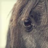 Horse Eye Photographic Print by  BlackCatPhotos