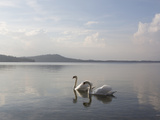 Swans Swimming along Tranquil Lake Waters Photographic Print by Ascent Xmedia