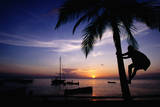 Climbing Coconut Tree at Sunset, Anse Chastanet. Photographic Print by Holger Leue