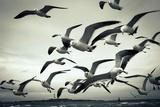 Bunch of Seagulls Papier Photo par  moaan