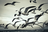 Bunch of Seagulls Photographic Print by  moaan