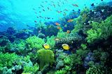 Tropical Fish Swimming over Reef Fotografie-Druck von Stephen Frink