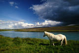 Icelandic Pony (Equus Caballus) Standing near Hvita River, Iceland Photographic Print by Art Wolfe