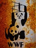 Panda Bear Wrestling Photo