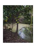 Egret by Pond, Duke Gardens, Durham, NC (Water Bird, Botanical Gardens, South) Photographic Print by Henri Silberman