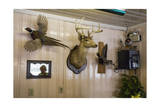 Taxidermy Birds and Deer on a Wall (Southern Diner Décor) Photographic Print by Henri Silberman