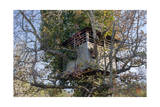 Tree House in Autumn (Chapel Hill, NC) Photographic Print by Henri Silberman