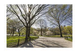 Central Park Walkway Trees and Squirrel (Springtime, Flowering Trees in an Urban Park) Photographic Print by Henri Silberman