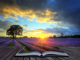 Creative Concept Image of Atmospheric Sunset Lavender Fields in Pages of Magic Book Photographic Print by  Veneratio