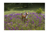 Fawn Garden Statue (Purple Flowers, Durham, NC) Photographic Print by Henri Silberman