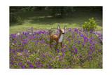 Fawn Garden Statue (Purple Flowers, Durham, NC) Photographic Print by Henri Silberman