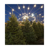 Christmas Trees for Sale 1 (Holiday Lights) Photographic Print by Henri Silberman