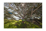 Painted Tree, Albany Bulb (Graffiti, Branches) Photographic Print by Henri Silberman