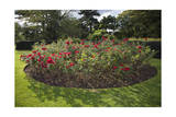 Rose Bed Kew Gaardens (English Garden Scene) Photographic Print by Henri Silberman