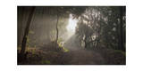 Fire Trail in Fog, Oakland, CA (Leona Heights, Morning) Photographic Print by Henri Silberman