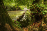 Beautiful Forest Scene of Enchanted Stream Flowing through Lush Green Foliage Photographic Print by  Veneratio