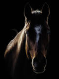 Horse in Backlight Photographic Print by Ryan Courson Photography