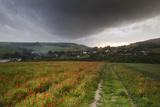 Vibrant Poppy Fields under Moody Dramatic Sky Prints by  Veneratio