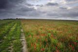 Vibrant Poppy Fields under Moody Dramatic Sky Poster by  Veneratio