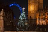 Chrristmas Tree outside Houses of Parliament in London with London Eye in Background Posters by  Veneratio