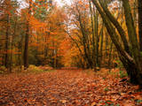 Beautiful Vibrant Autumn Fall Forest Scene in English Countryside Landscape Posters by  Veneratio
