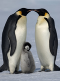 Emperor Penguins with Chick Photographic Print by David Yarrow Photography