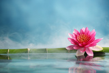 Bamboo and Water Lily Reflected in a Serenity Pool Photographic Print by Liang Zhang