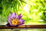 Spa Still Life with Lotus Float on Water,Bamboo Background. Photographic Print by Liang Zhang