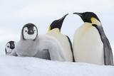 Emperor Penguin (Aptenodytes Forsteri) Photographic Print by Martin Ruegner