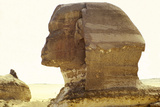 Sphynx Egypt Photographic Print by Peter Phipp