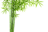 Bamboo Isolated on White Background Photographic Print by Liang Zhang