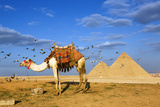 Egyptian Pyramids Photographic Print by Visions Of Our Land