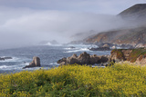 Mustard and Fog at Sobranes Point Photographic Print by Don Smith