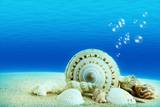 The Underwater World,Seashells with Underwater Background. Photographic Print by Liang Zhang