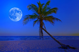 The Moon Shining in a Deserted Tropical Beach at Midnight with a Coconut Palm Tree in the Foregroun Photographic Print by  Kamira