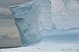 Chinstrap Penguinson Iceberg. Photographic Print by Daisy Gilardini