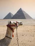 Camel Photographic Print by Marcos Rivero Fotógrafo
