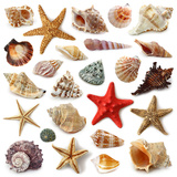 Seashell Collection Isolated on White Background Posters by  egal