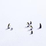 The Penguins Playing Soccer Fotografisk tryk af ULTRA.F