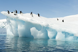 Adelie Penguins on Iceberg Photographic Print by Daisy Gilardini