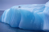 Antarctica, Weddell Sea, Chinstrap Penguins Resting on Blue Iceberg Photographic Print by Kevin Schafer