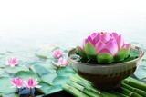 Spa Still Life with Lotus for Body Treatment Photographic Print by Liang Zhang