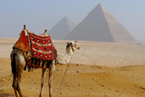 Camel for Ride on Desert Photographic Print by Bijan Choudhury
