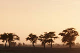Countryside at Dusk near to Djenne, Mali Fotografisk tryk af Cultura Travel/Philip Lee Harvey
