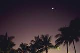 A Palm Tree and the Moon, Low Angle View, Long Exposure Photographic Print by  DAJ