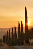 Road Lined with Cypress Trees at Sunrise, Tuscany Photographic Print by Adam Jones