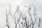 Silhouette of Bird on a Bare Branch in Winter Photographic Print by Aaron McCoy