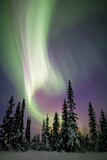 Aurora Borealis and Snow Covered Trees Photographic Print by Justin Reznick Photography