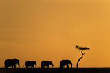 Herd of Elephants and Vultures at Sunrise Photographic Print by Mike Hill