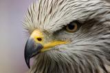 Adler Fotodruck von javier balseiro